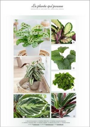 Idées de plantes design pour donner du style à votre intérieur: téléchargez le guide gratuit!