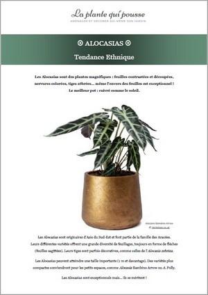 Donnez du style à votre intérieur grâce à une sélection de plantes et de pots design: télécgargez le guide gratuit!