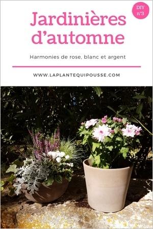 Composer des jardinières d'automne soi-même, assortir des plantes harmonieuses. Découvrez le DIY et les modèles de jardinières d'automne, lisez l'article!