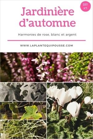 DIY idées de composition et modèles de jardinières d'automne: lisez l'article pour en savoir plus!