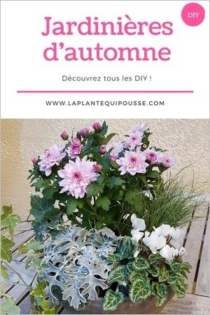 Découvrez 5 DIY et modèles de jardinières d'automne faciles à réaliser soi-même. Lisez l'article!
