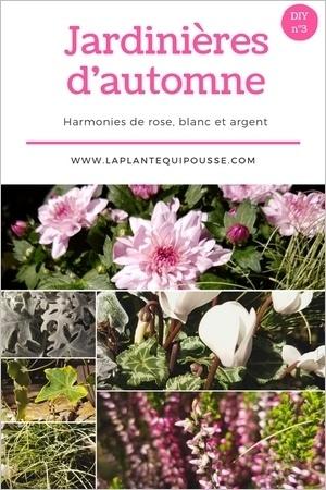 Associer des pots et jardinières d'automne: DIY et liste de plantes et fleurs de saison. Lisez l'article pour en savoir plus!