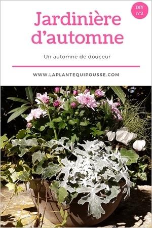 DIY: composer soi-même une belle jardinière d'automne aux fleurs roses et blancs, et aux feuillages verts et gris argent. Lisez l'article pour en savoir plus!