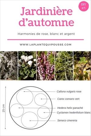 DIY modèle et plan de plantation d'une jardinière d'automne rose, blanc et gris. Pour en savoir plus, lisez l'article!