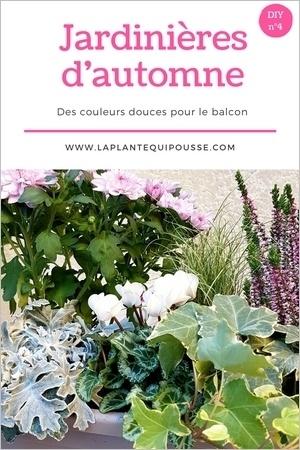 DIY: idées et modèles de jardinières d'automne rectangulaire pour balcon ou terrasse. Lisez l'article pour en savoir plus.