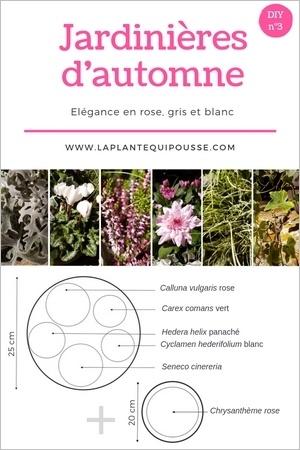 Association de jardinières d'automne: plans de jardinières et potées d'automne à réaliser soi-même facilement. Lisez l'article!
