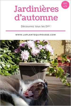 Réaliser une jardinière d'automne: DIY et modèles de jardinières d'automne simples et belles! Lisez l'article pour en savoir plus