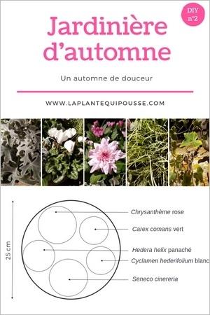 DIY: modèle de plantation d'une jardinière d'automne aux couleurs blanches, gris argent et rose. Pour en savoir plus, lisez l'article!