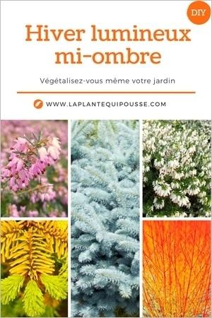5 idées de plantes et de fleurs pour un beau jardin (massif à la mi-ombre). Pour en savoir plus, lisez l'article!