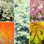Un beau jardin en hiver: idée de massif fleuri et coloré pour l'hiver