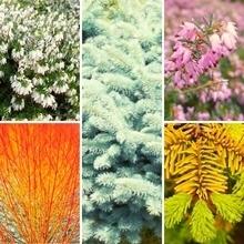 Quelles plantes et quelles fleurs choisir pour un beau jardin en hiver? Une superbe association de plantes pour un jardin lumineux: lisez l'article!
