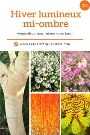 Idée d'association de plantes pour un beau jardin fleuri et lumineux en hiver. Lisez l'article pour en savoir plus!
