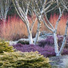 Inspiration, idées, associations de plantes pour un beau jardin en hiver