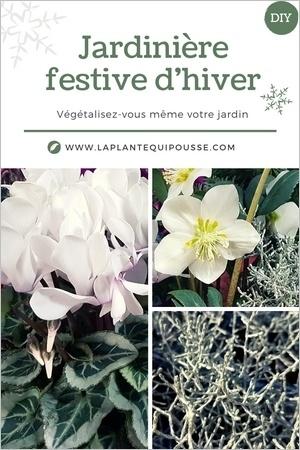 Idée de modèle de jardinière fleurie pour l'hiver et les fêtes, avec hellébore, cyclamen et calocephalus