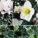 Jardinière fleurie d'hiver: idées DIY pour les fêtes et après!