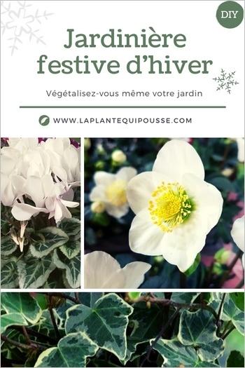 Idée et modèle de jardinière fleurie rustique pour l'hiver et les fêtes, avec hellébore, cyclamen et lierre panaché Glacier