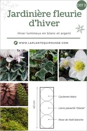 Idée DIY composer une jardinière fleurie rustique pour les fêtes, style nature, avec des fleurs lumineuses blanches et des feuillages gris argent et vert, avec décoration de pommes de pin et mousses