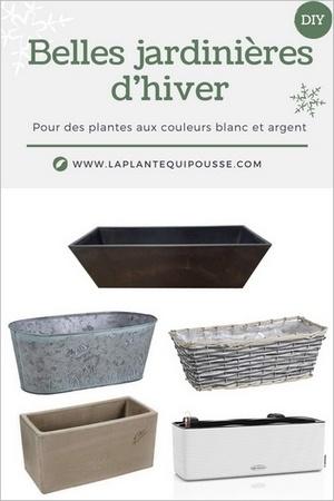 Quelles jardinières choisir pour les fêtes ou des plantes et des fleurs blanches, aux feuillages gris et argent?