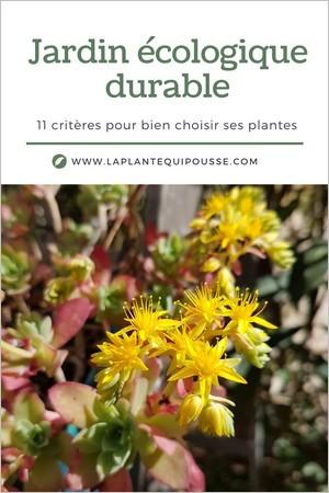 Jardinage durable, 11 critères pour bien choisir des plantes adaptées à son jardin: climat, rusticité, sol, exposition... Sedum palmeri plante grasse rustique.