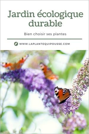 Jardin écologique: faut-il introduire des plantes exotiques dans son jardin? Buddleia, l'arbre aux papillons.