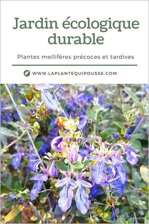 Jardin écologique: liste des plantes mellifères précoces et tardives pour un jardin favorable à la biodiversité
