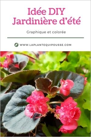 DIY composition d'une jardinière d'été
