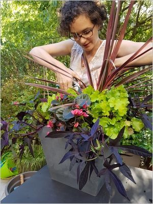 DIY Composer une jardinière d'été: taille, entretien pour un pot superbe toute la saison