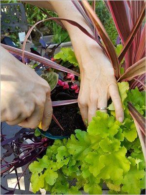 DIY composer une jardinière d'été colorée et belle toute l'année