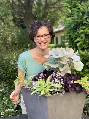 DIY Composer une jardinière d'été avec le superbe Séneçon blanc Angel Wings (Senecio candicans), idée de composition