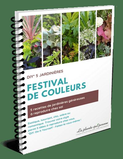 Guide 5 DIY composition de jardinières colorées pour toute l'année et chaque exposition (soleil, mi-ombre, ombre)
