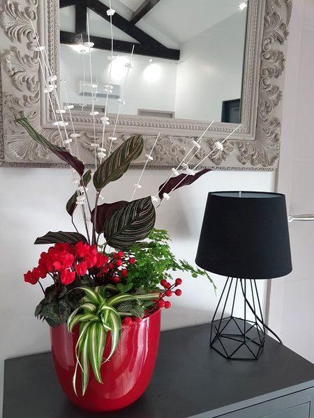 DIY comment faire une composition avec plusieurs plantes vertes et fleuries pour l'intérieur (décoration de fêtes, Noël et cadeau)