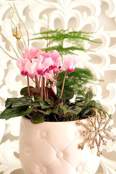 Planter soi-même une composition de plantes d'intérieur féminine pour les fêtes