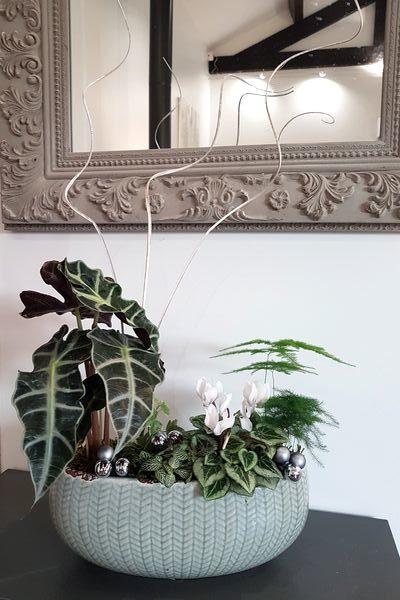 DIY composition de plantes vertes d'intérieur fait maison: un vrai mini-paysage pour les hommes