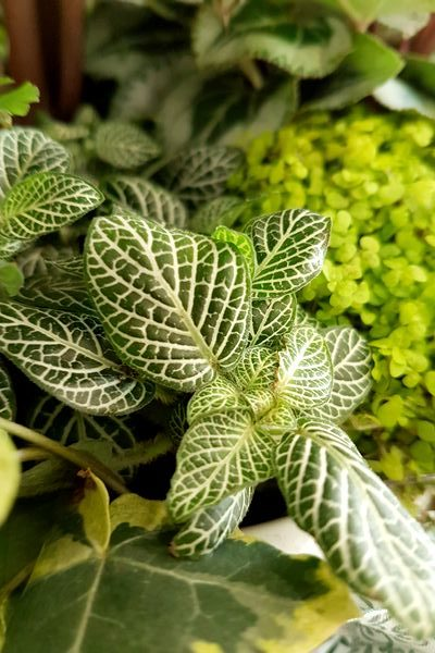 Marier les plantes vertes dans des arrangements de plantes d'intérieur: DIY comme un pro.