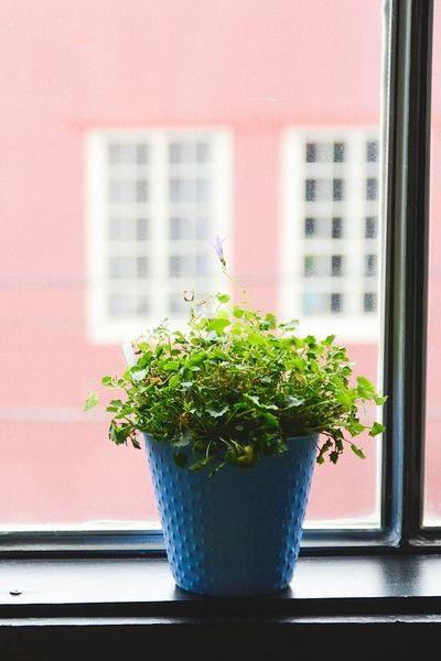 Plante chétive isolée: tentez les compositions de plusieurs plantes vertes, esthétique et généreuse