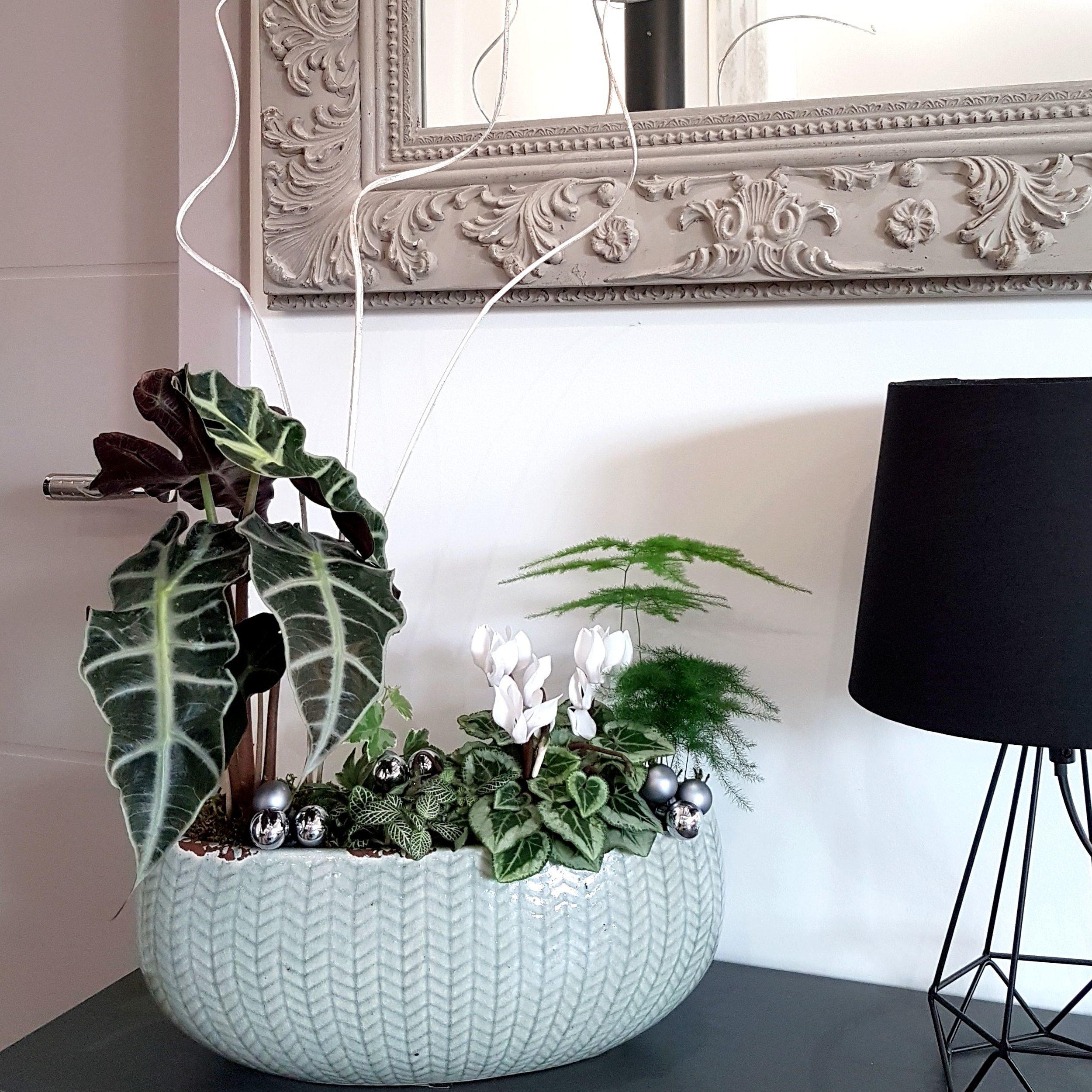 DIY modèle idée de composition de jardinière de plantes vertes d'intérieur - Orphée