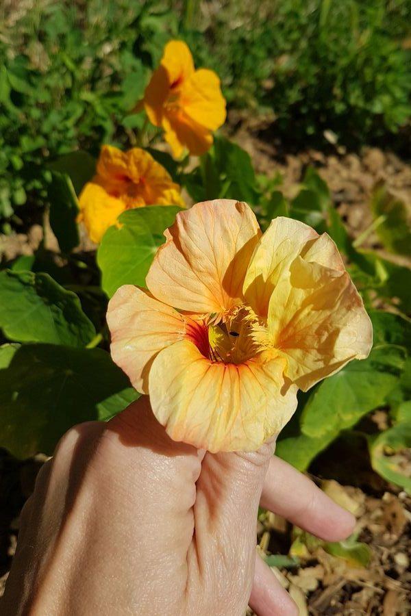 Service à la personne et petits travaux de jardinage: entretien, arrosage, tonte, taille...