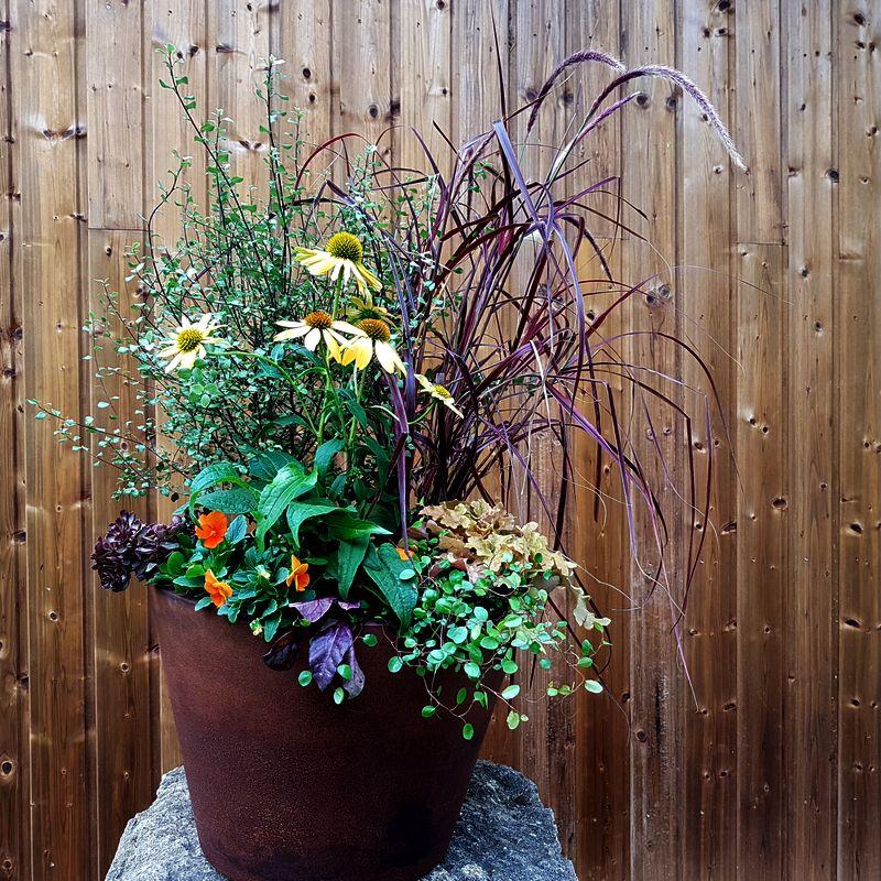 Cours en ligne atelier et Idée de création jardinière sauvage, naturelle et champêtre. Créez une jardinière selon votre style.