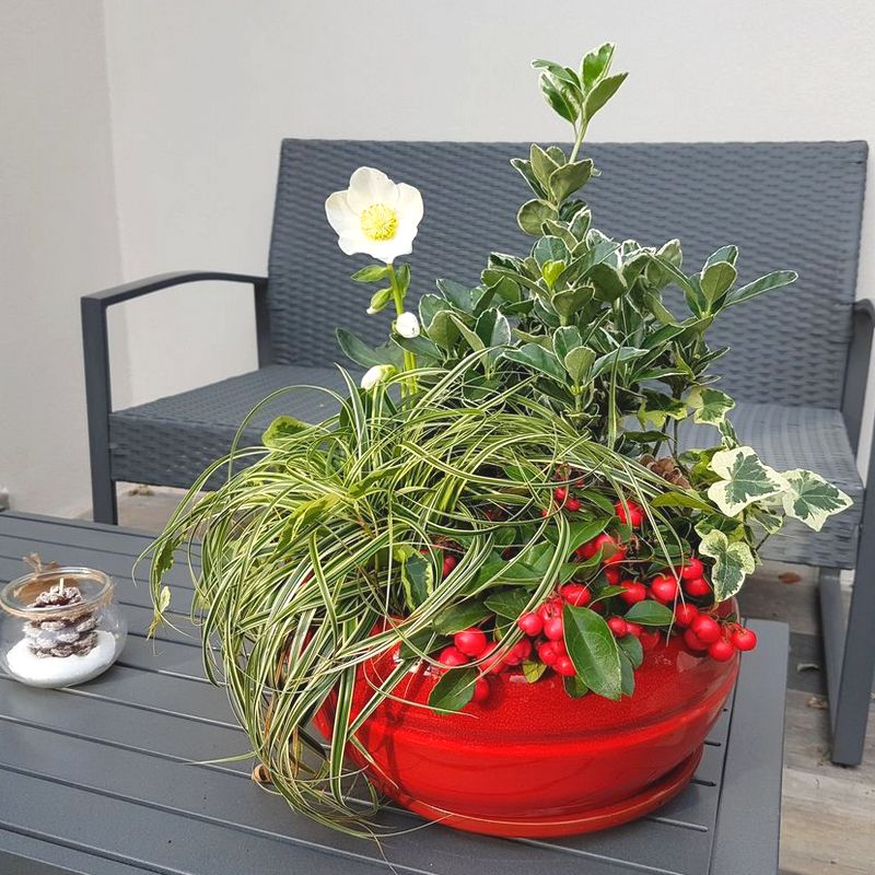Modèle de jardinière d'hiver de vivaces facile à reproduire: pot rouge, hellébore...