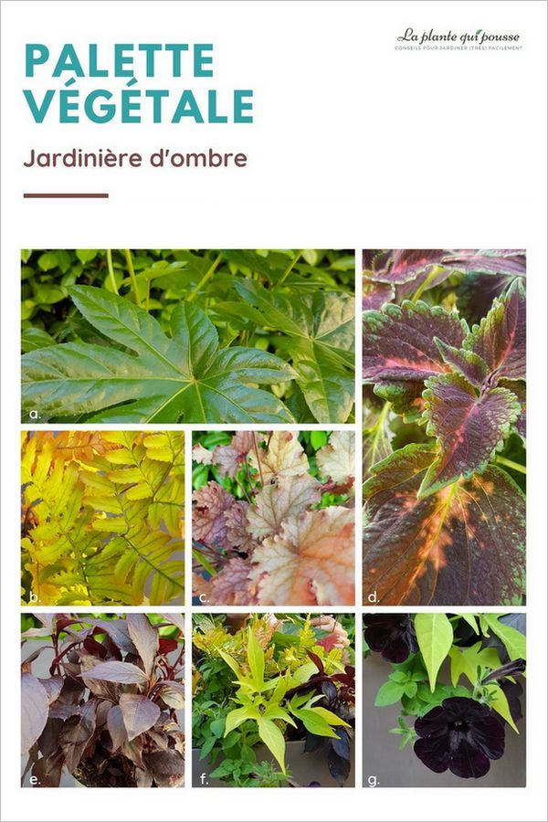 Conception de modèles de jardinières en ligne