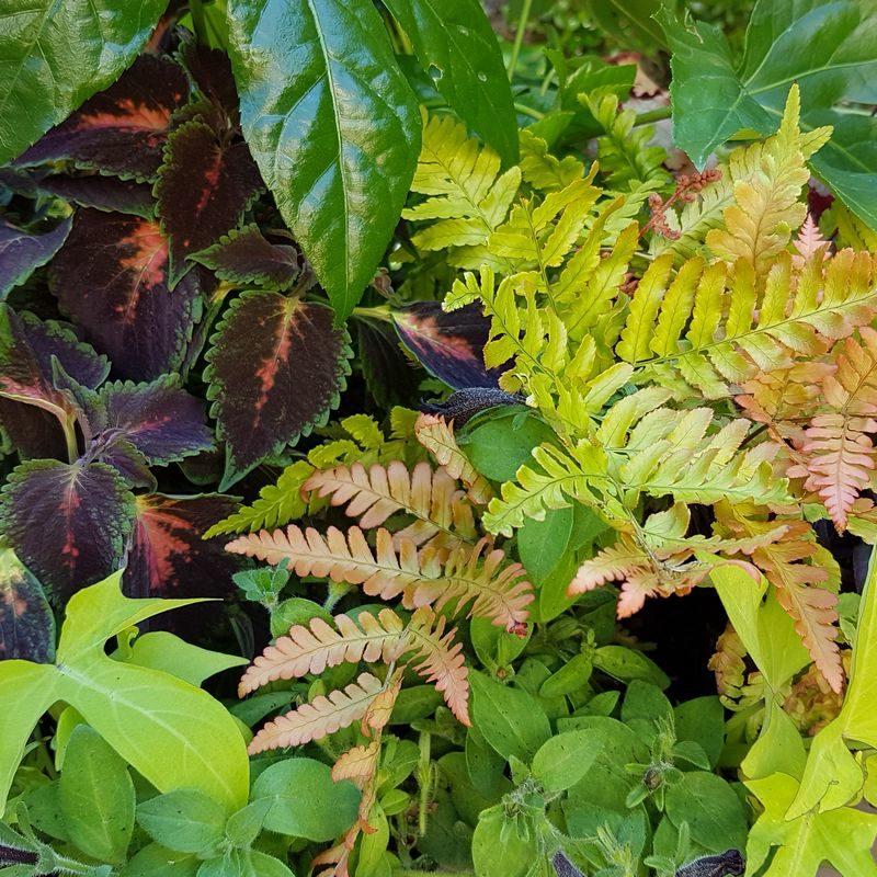 Création et composition de pots, bacs et jardinières de plantes vivaces