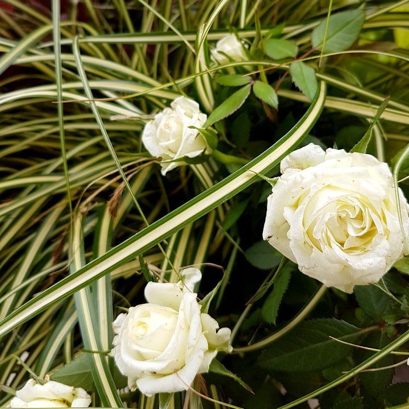 Jardinage, services à la personne: jardinier Hérault et Gard