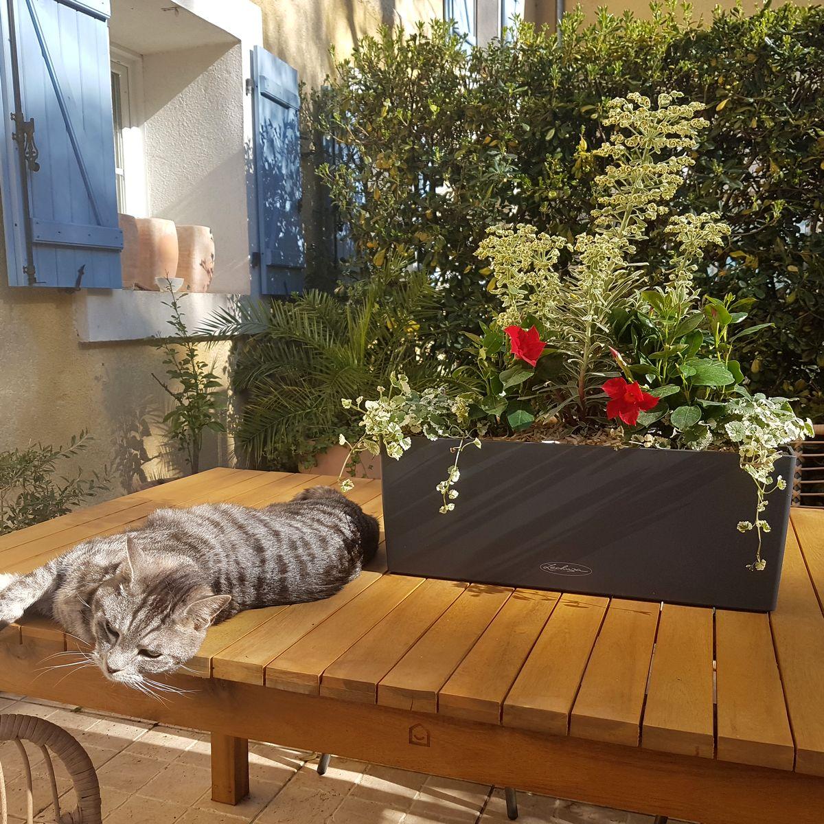Jardinière plein soleil euphorbe dipladenia