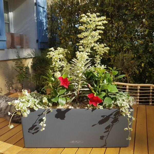 Jardinière plein soleil plantes méditerranéennes