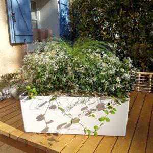 Jardinière plein soleil Euphorbia hypericifolia Axel