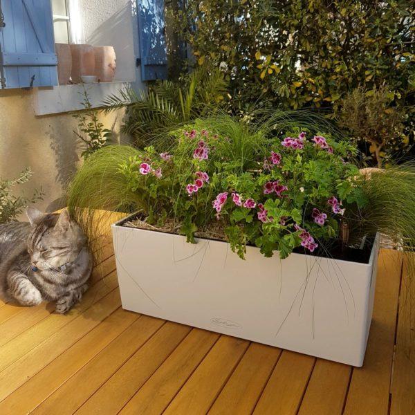 Jardinière haut de gamme garnie de pelargonium et de stipa pour balcon, terrasse, rebord de fenêtre