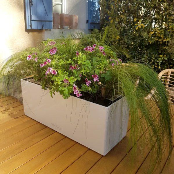 Jardinière de pelargonium roses et de stipa pour le soleil