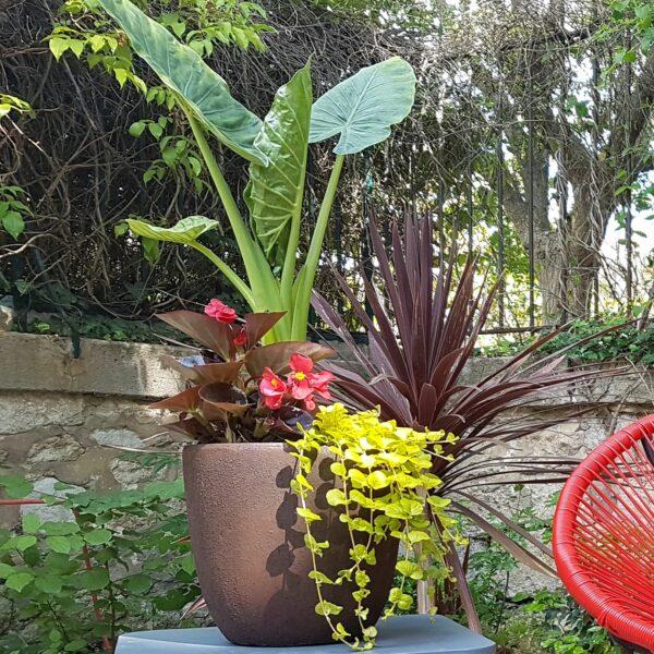 Jardinière exotique extérieur intérieur mi-ombre Krabi