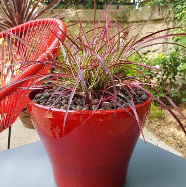 Coupe jardinière exotique rouge avec Penniserum Fireworks