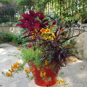 Jardinière exotique soleil aux couleurs rouge orangé Palawan